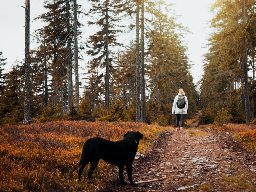 short coat black dog standing on brown ground