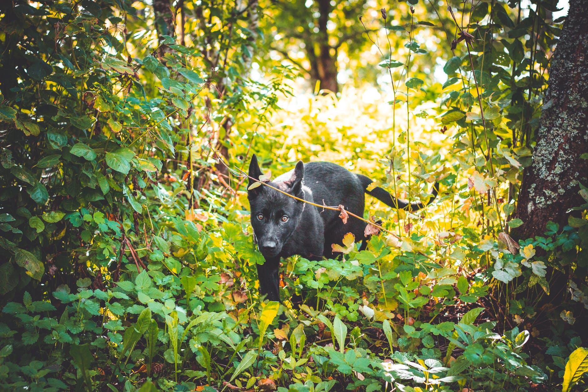 black dog on forest